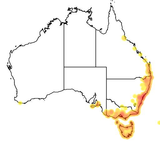 distribution map showing range of Cryptostylis subulata in Australia