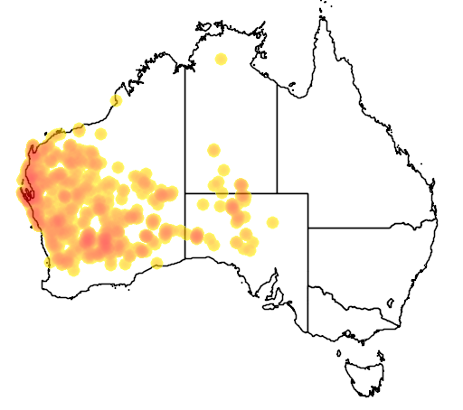 distribution map showing range of Ctenophorus reticulatus in Australia