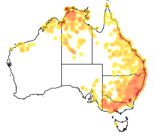 distribution map showing range of Ctenotus robustus in Australia