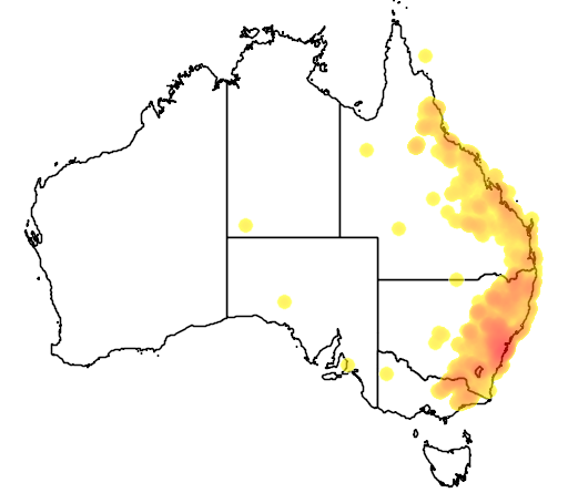distribution map showing range of Ctenotus taeniolatus in Australia