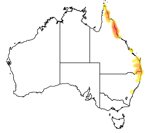 distribution map showing range of Cyclopsitta diophthalma in Australia