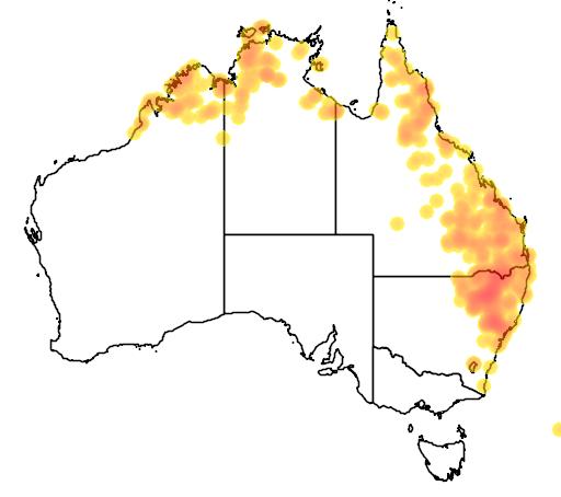 distribution map showing range of Cymbidium canaliculatum in Australia