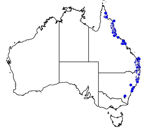 distribution map showing range of Cymbidium madidum in Australia