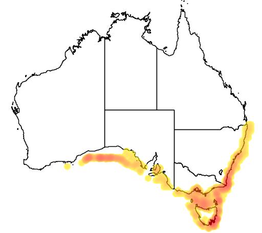 Cyttus australis