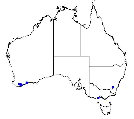 distribution map showing range of Darwinia macrostegia in Australia