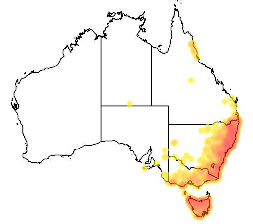 distribution map showing range of Dasyurus maculatus in Australia