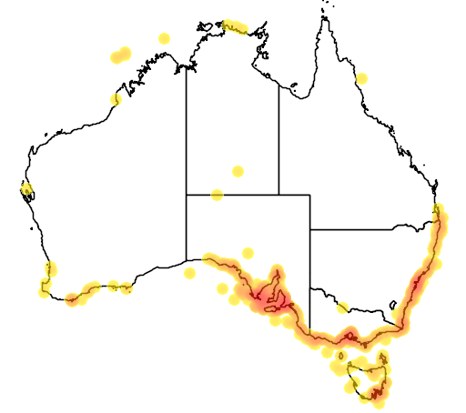 distribution map showing range of Delphinus delphis in Australia