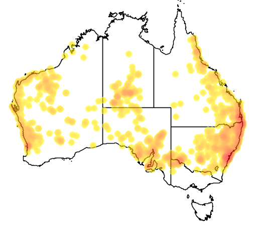 distribution map showing range of Demansia psammophis in Australia