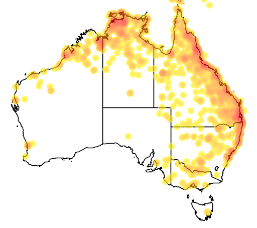 distribution map showing range of Dendrocygna arcuata in Australia
