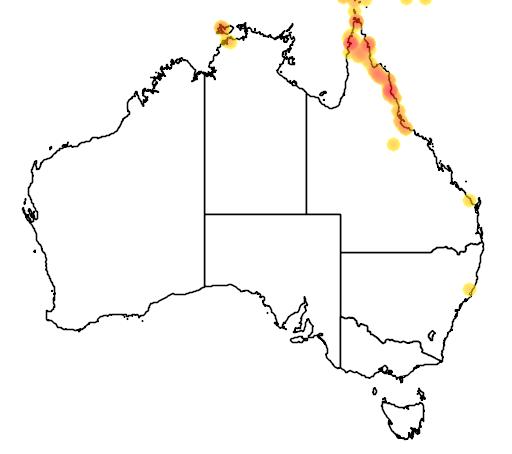 distribution map showing range of Dendrocygna guttata in Australia