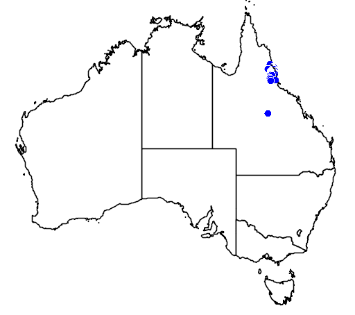 distribution map showing range of Dendrolagus lumholtzi in Australia