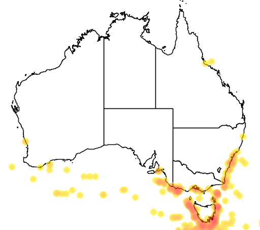 distribution map showing range of Diomedea epomophora in Australia