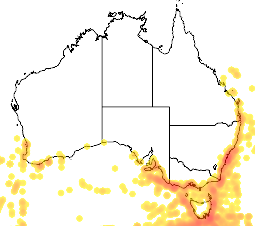 distribution map showing range of Diomedea exulans in Australia
