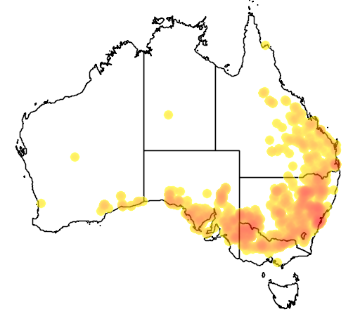 distribution map showing range of Diplodactylus vittatus in Australia