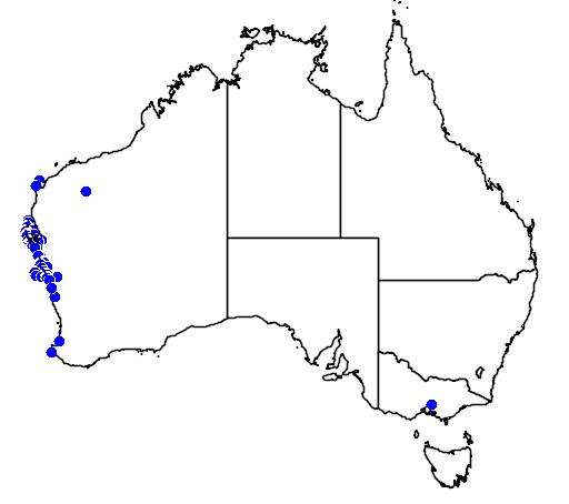 distribution map showing range of Diplolaena grandiflora in Australia