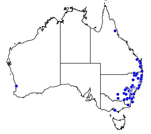 distribution map showing range of Diuris aurea in Australia