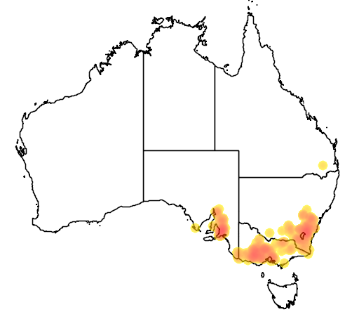 distribution map showing range of Diuris behrii in Australia