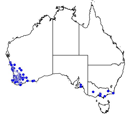 distribution map showing range of Diuris corymbosa in Australia