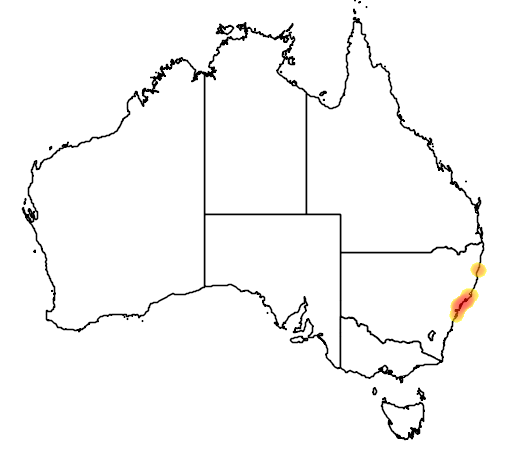 distribution map showing range of Diuris praecox in Australia