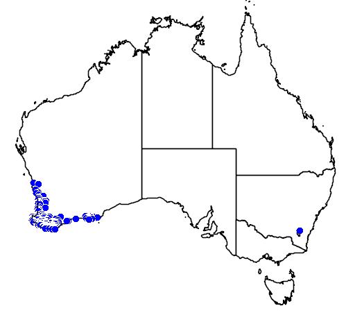 distribution map showing range of Drakaea glyptodon in Australia