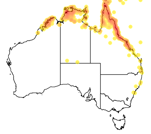 distribution map showing range of Ducula bicolor in Australia