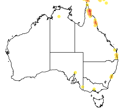 distribution map showing range of Eclectus roratus in Australia
