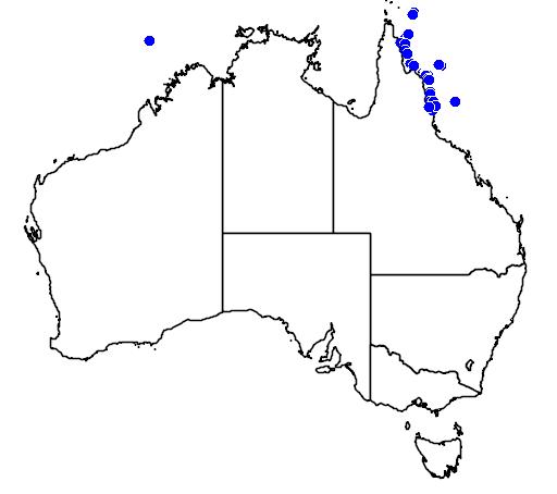 Ecsenius australianus