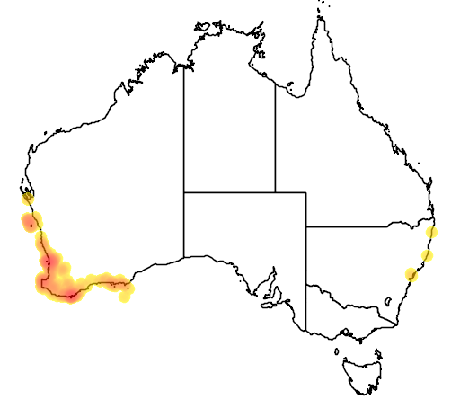 distribution map showing range of Egernia kingii in Australia
