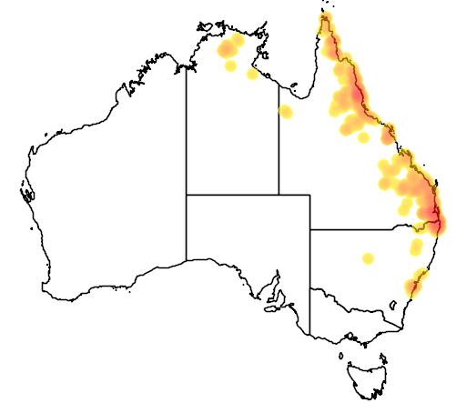 distribution map showing range of Elseya latisternum in Australia