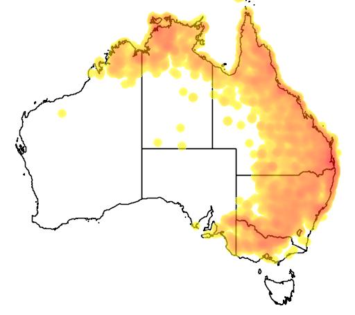 distribution map showing range of Entomyzon cyanotis in Australia