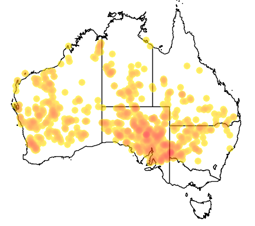 distribution map showing range of Eremiascincus richardsonii in Australia