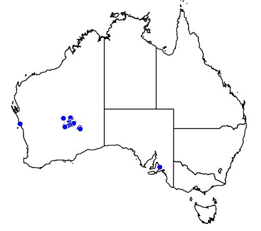 distribution map showing range of Eremophila abietina in Australia