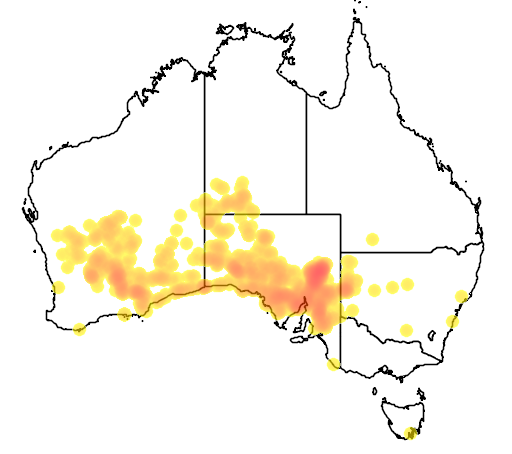 distribution map showing range of Eremophila alternifolia in Australia