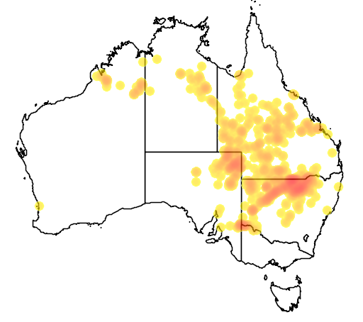 distribution map showing range of Eremophila bignoniiflora in Australia