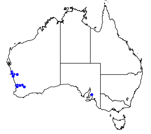 distribution map showing range of Eremophila brevifolia in Australia