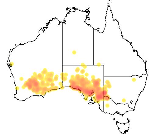 distribution map showing range of Eremophila scoparia in Australia