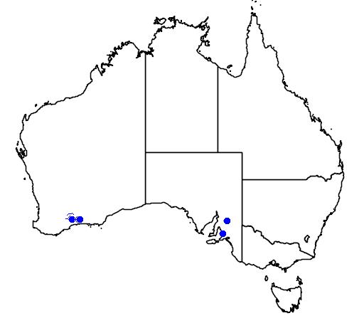 distribution map showing range of Eremophila subteretifolia in Australia