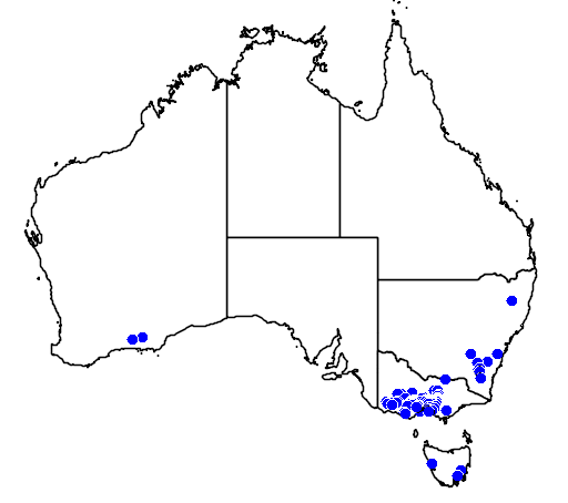 distribution map showing range of Eucalyptus crenulata in Australia