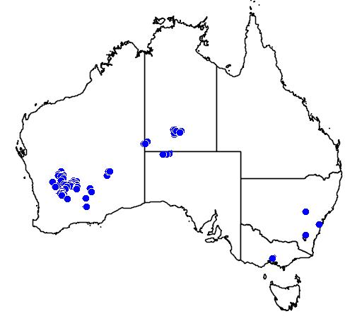 distribution map showing range of Eucalyptus orbifolia in Australia