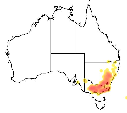 distribution map showing range of Eucalyptus polyanthemos in Australia