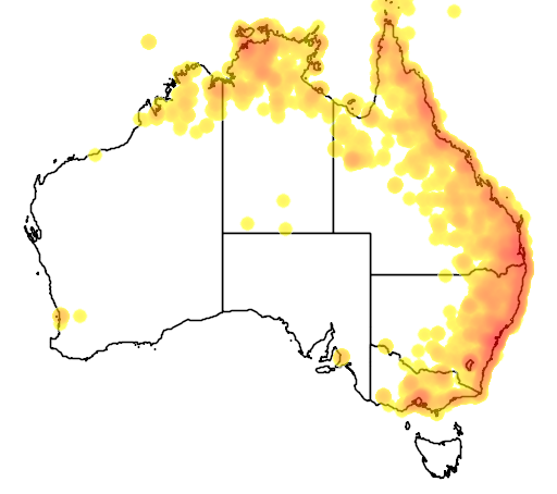 distribution map showing range of Eudynamys scolopacea in Australia
