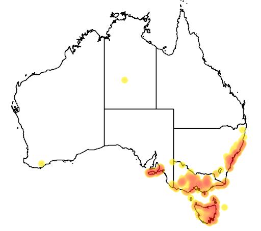 distribution map showing range of Euryomyrtus ramosissima in Australia
