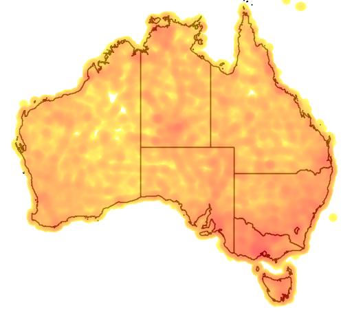 distribution map showing range of Falco berigora in Australia