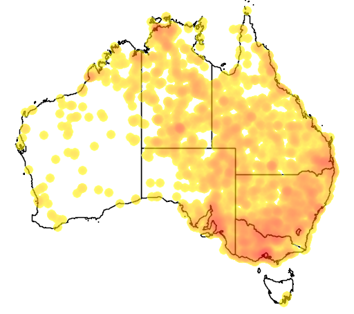 distribution map showing range of Falco subniger in Australia