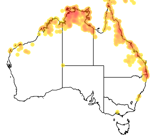 distribution map showing range of Ficus virens in Australia