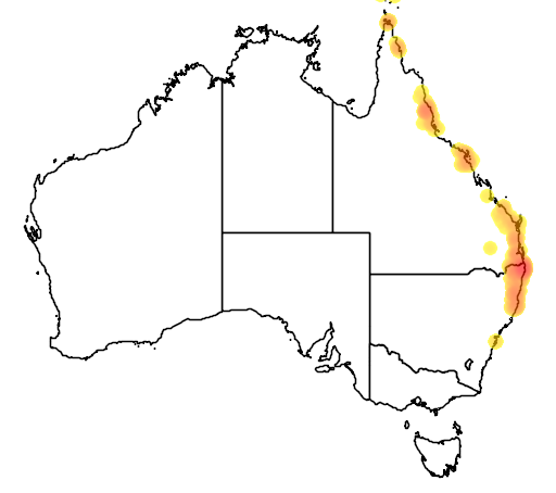 distribution map showing range of Flindersia schottiana in Australia