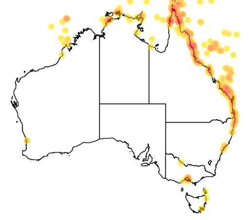 distribution map showing range of Fregata minor in Australia