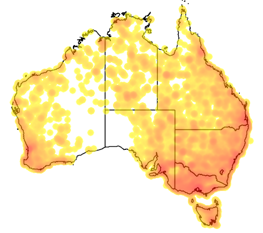 distribution map showing range of Fulica atra in Australia