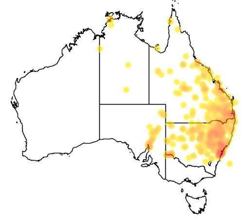 distribution map showing range of Furina diadema in Australia