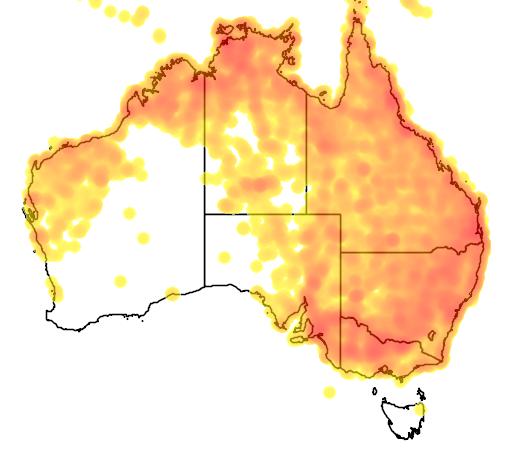 distribution map showing range of Geopelia striata in Australia